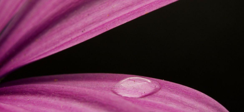 flower-5004175_1920